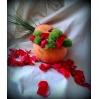 GALERIJA  gėlių