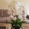 Dirbtinės orchidėjos